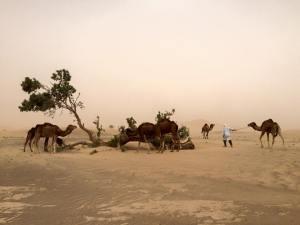 pouštní bouře